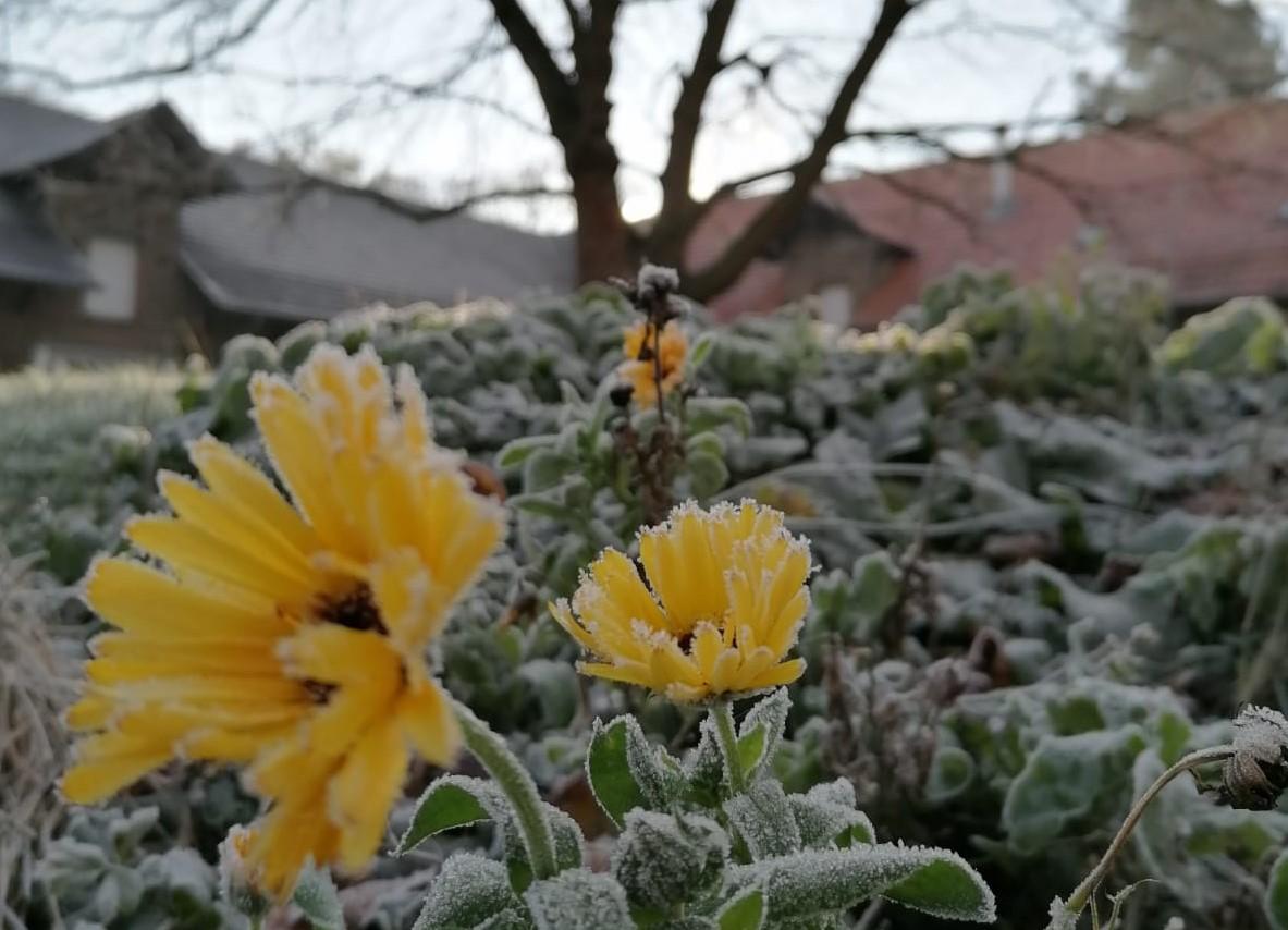 Frostblume Dützhof Newsletter